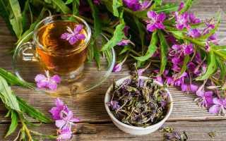 Копорский чай — полезные свойства и противопоказания, как приготовить
