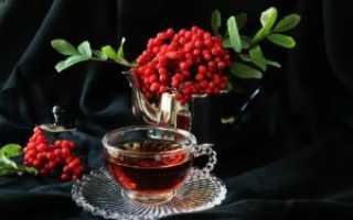 Чай из рябины черноплодной и красной