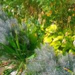 Листья с цветущими стеблями полыни серебристой возбуждают аппетит, активизируют пищеварительные процессы, снижают газообразование, усиливают отток желчи